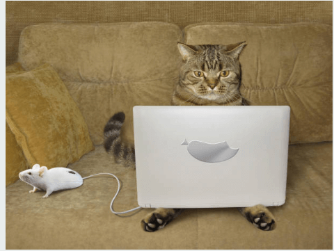 Witty Brown Cat Sitting On Couch With Laptop on its lap and  A live mouse